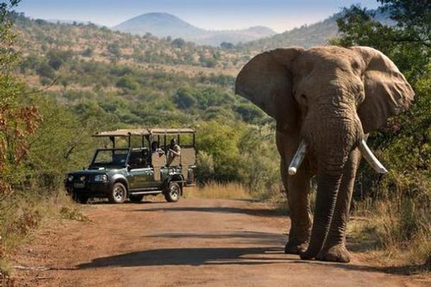 África do Sul - Pilanesberg